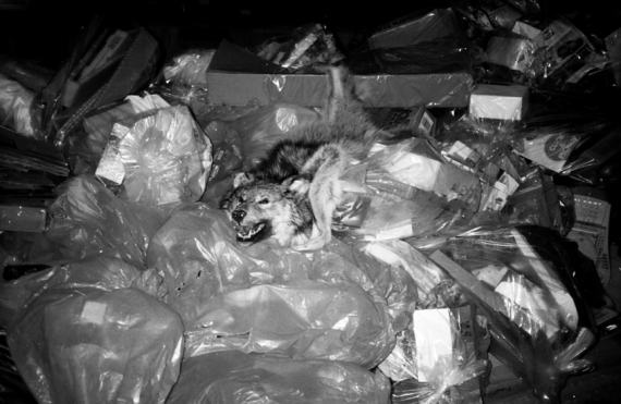 20100413185515-5-wolfrubbage-b.jpg