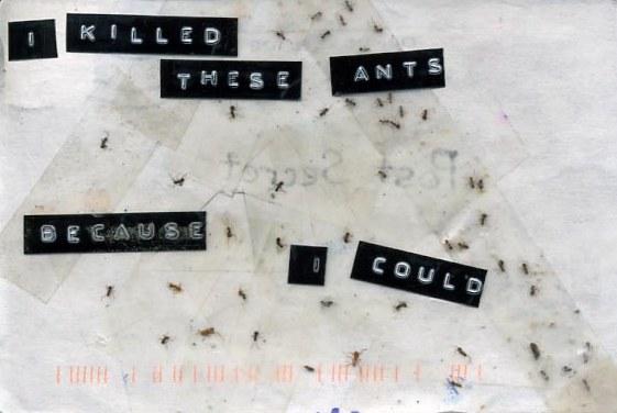 20080505012730-ants-b.jpg